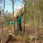 Podas biomasa forestal